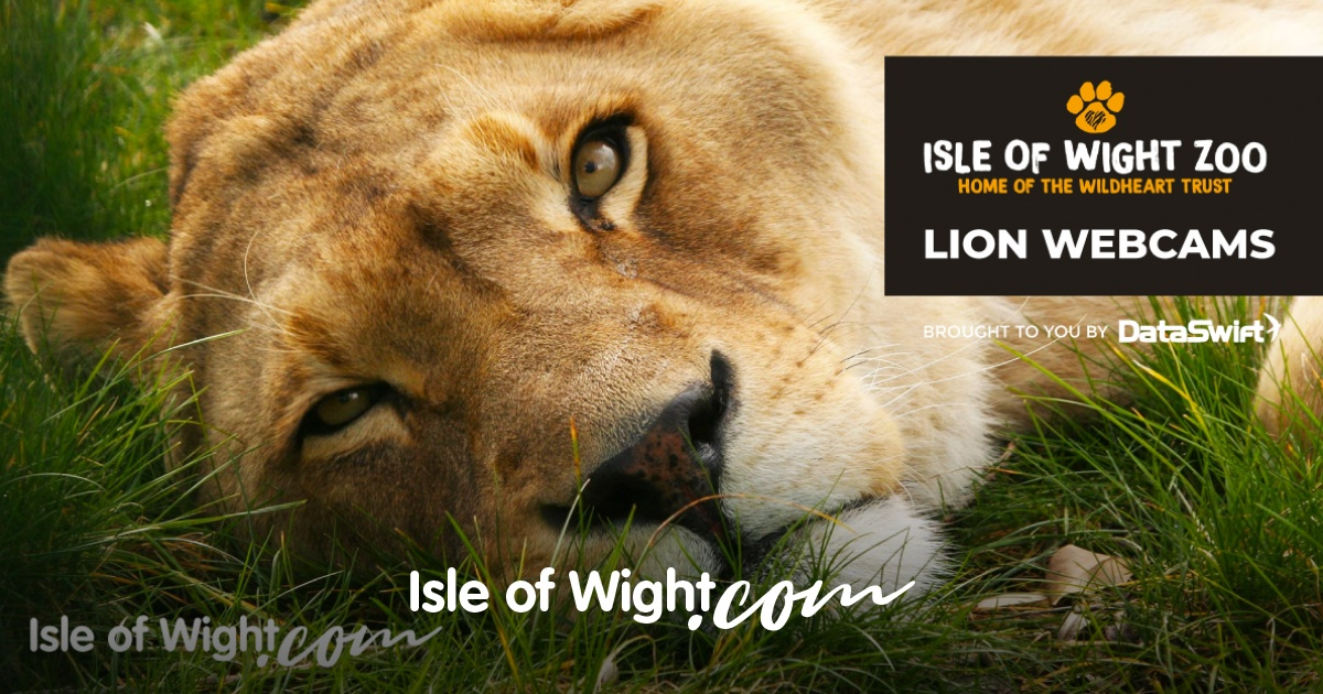 Isle of Wight Webcam Streams