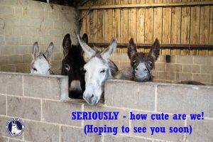 donkeyUSEsanctuarynewwelshies copy