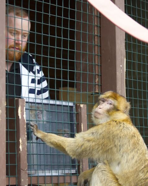 Monkey Haven Isle of Wight Events